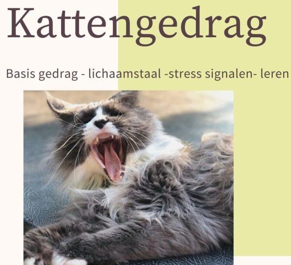 kattengedrag
